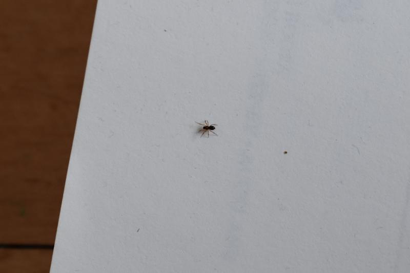 DSC_20210113_113754-0500_750.Smaller_Spider_thm.jpg